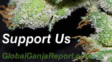 Support Global Ganja Report